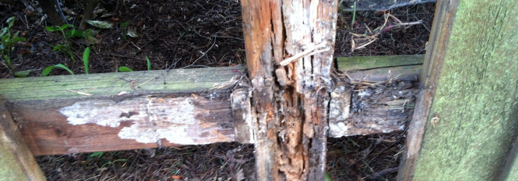 rotted fence posts and the cure